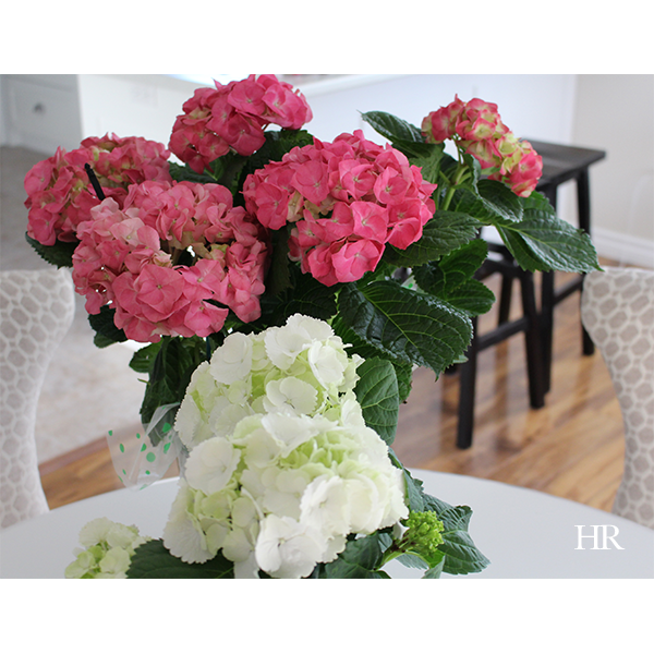 pink and white hydrangea.