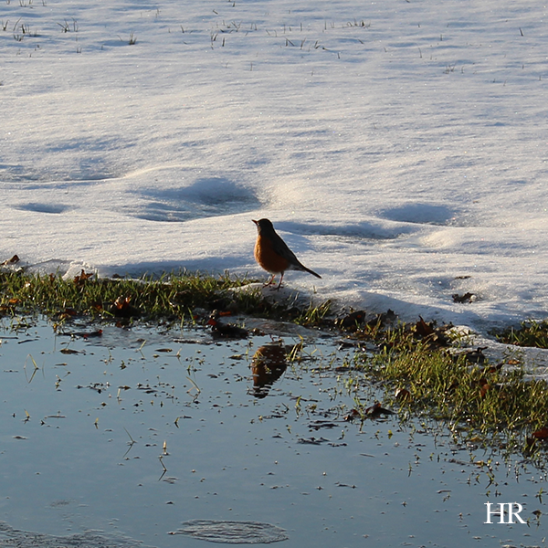 april6_hopereflected_robin2