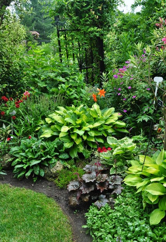 shade gardens featuring hostas