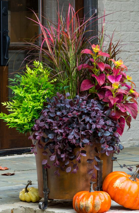Fall Gardening Ideas Part - 38: Fall Container Gardening