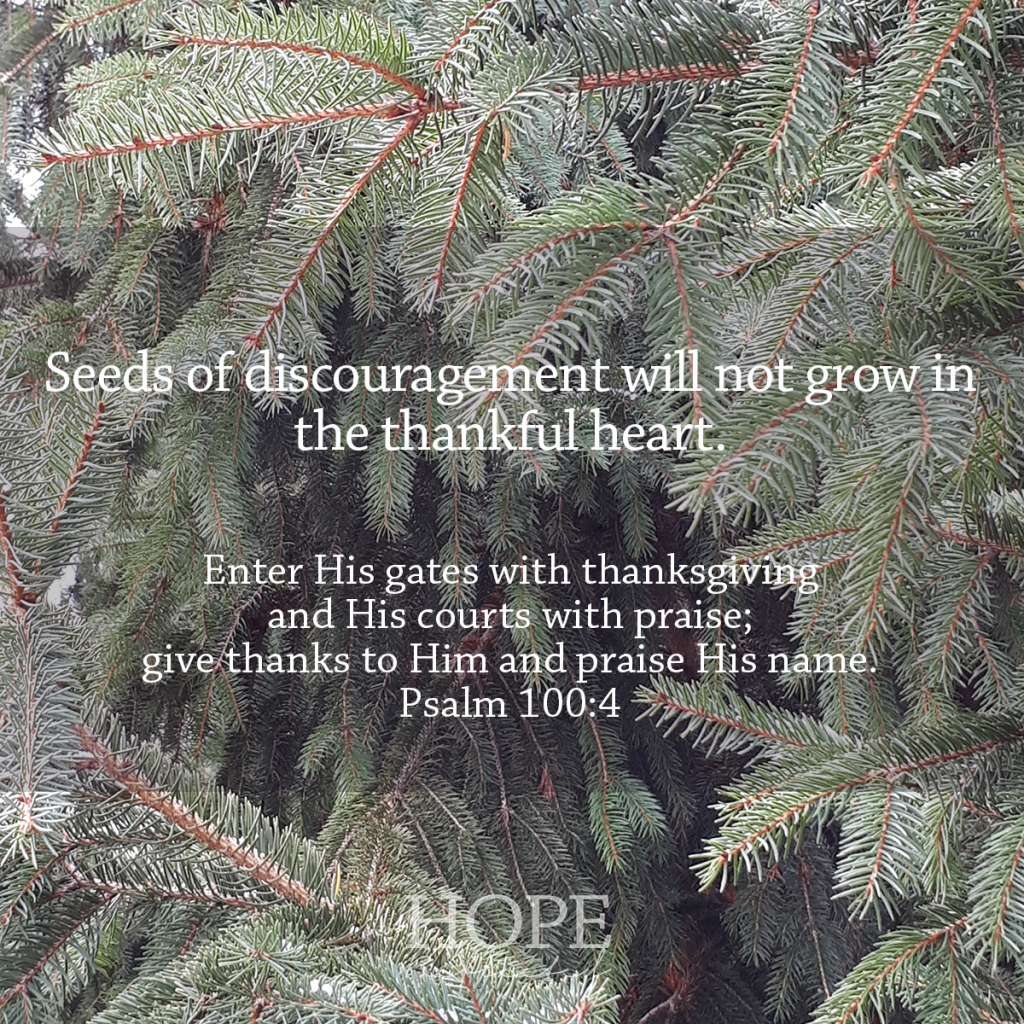 Seeds of discouragement will not grow in the thankful heart. | See more at hopereflected.com