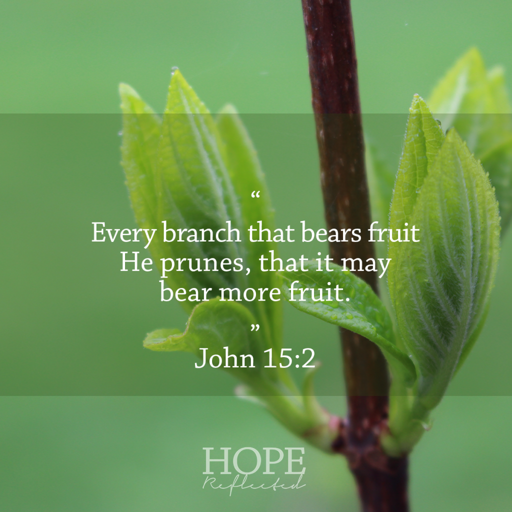 """""""Every branch that bears fruit He prunes, that it may bear more fruit."""" (John 15:2) The Purpose of Pruning 