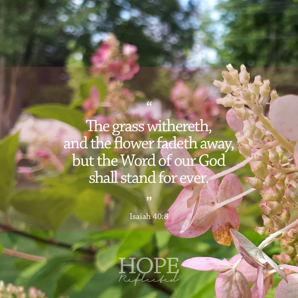 """The grass withereth, and the flower fadeth away, but the Word of our God shall stand for ever."" (Isaiah 40:8) 