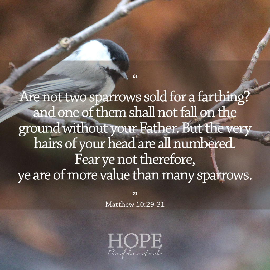 """""""Are not two sparrows sold for a farthing? and one of them shall not fall on the ground without your Father. But the very hairs of your head are all numbered. Fear ye not therefore, ye are of more value than many sparrows."""" (Matthew 10:29-31) 