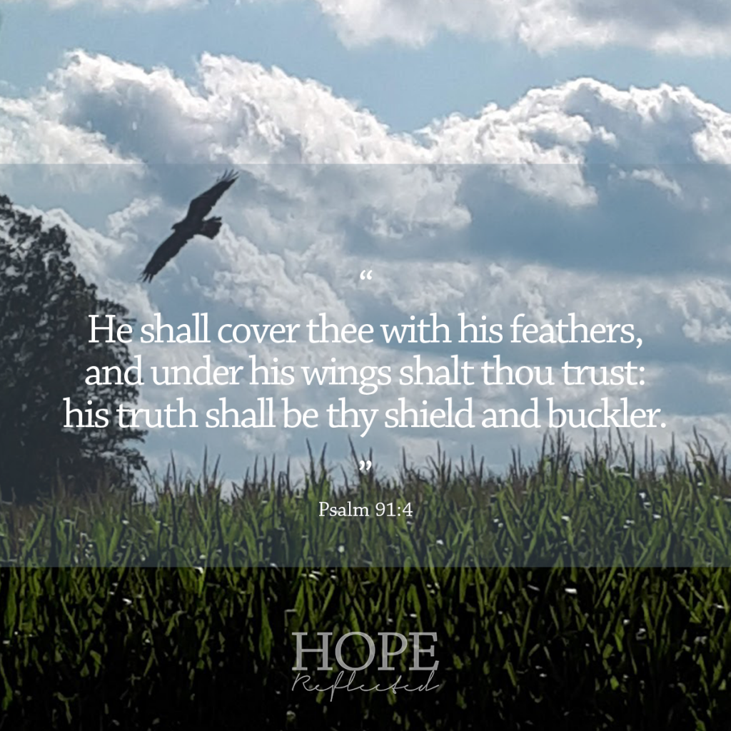 """He shall cover thee with his feathers, and under his wings shalt thou trust: his truth shall be thy shield and buckler."" (Psalm 91:4) 